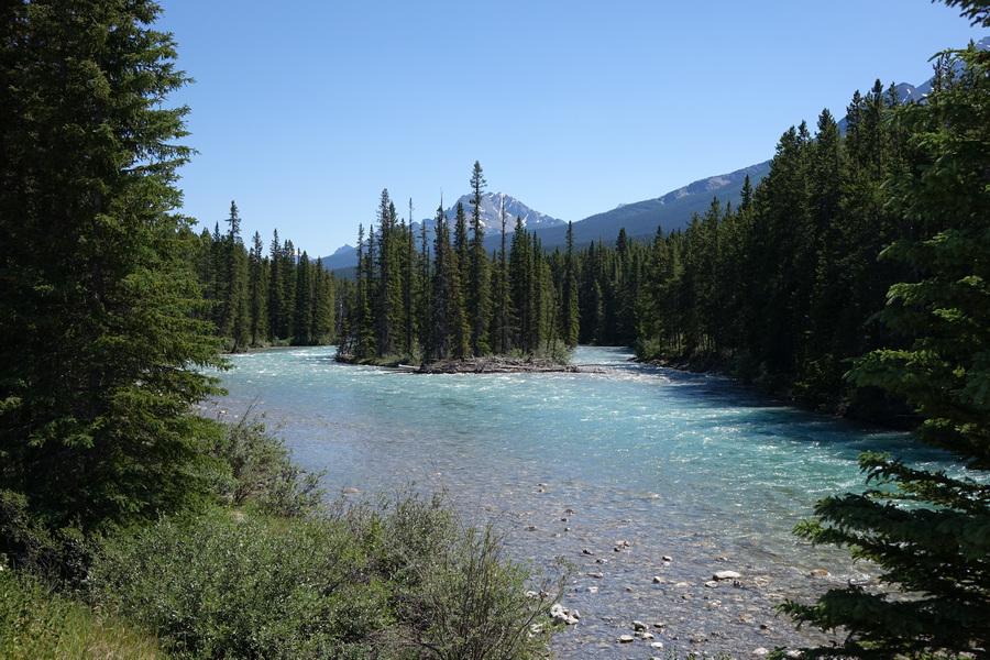 Bow River scene