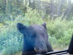 Picture of rest stop black bear