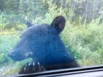 Picture of black bear at rest stop